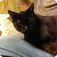 Adopt A Pet :: Lauralyn - Acushnet, MA