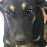 Adopt A Pet :: Brie - Oswego, IL