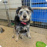Adopt A Pet :: Rosie T - Las Vegas, NV