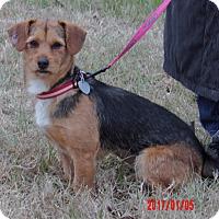 Adopt A Pet :: Lilly (13 lb) Sweeite Pie! - Burlington, VT