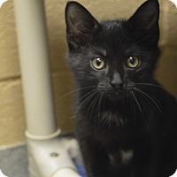 Adopt A Pet :: Zowie - Germantown, TN