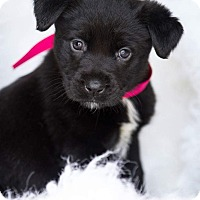 Adopt A Pet :: Raven 💜 ADOPTED! - Allentown, PA