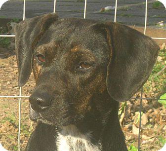 Remi | Adopted Dog | J...