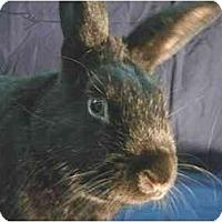 Adopt A Pet :: Sirius - Newport, DE