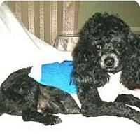 Adopt A Pet :: Andrei - Mooy, AL