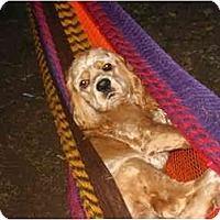 Adopt A Pet :: Charlie3 - Tacoma, WA