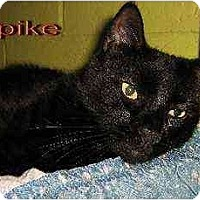 Adopt A Pet :: Spike - Clementon, NJ
