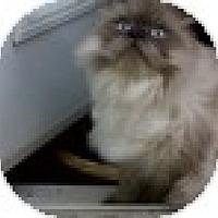 Adopt A Pet :: Truman - Vancouver, BC