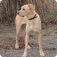 Adopt A Pet :: Cleo - Rigaud, QC