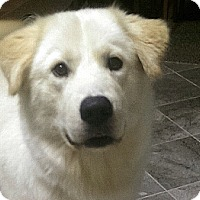 Adopt A Pet :: ZEKE - Pawling, NY