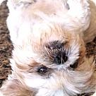 Adopt A Pet :: Daisy May