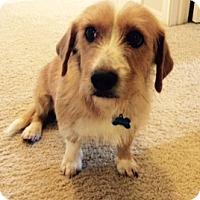 Adopt A Pet :: Macy - Austin, TX