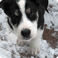 Adopt A Pet :: HOW TO BECOME A FOSTER HOME - Caledon, ON