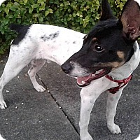 Adopt A Pet :: Beanie Baby - Jacksonville, FL