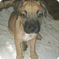Adopt A Pet :: Falcor *PENDING* - Lima, OH