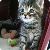 Adopt A Pet :: Carmell - Medford, NJ