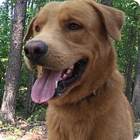 Adopt A Pet :: Jar - Brattleboro, VT