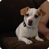 Adopt A Pet :: Fallon - Las Vegas, NV