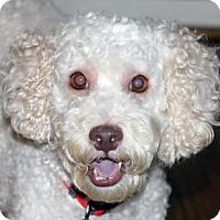 Adopt A Pet :: Duffy - Atlanta, GA