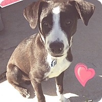 Adopt A Pet :: marvelous max - Pflugerville, TX