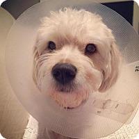 Adopt A Pet :: JoJo - Nashville, TN