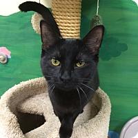 Adopt A Pet :: Schatzie - Byron Center, MI
