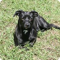 Adopt A Pet :: Barley - Lufkin, TX