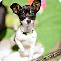 Adopt A Pet :: Calvin - Bellbrook, OH