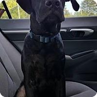 Adopt A Pet :: Milo - $125 - Seneca, SC