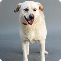 Adopt A Pet :: Wolfgang - Marietta, GA