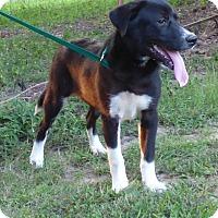 Adopt A Pet :: Gomez - Bedminster, NJ
