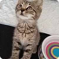 Adopt A Pet :: Fuji - Middletown, NY