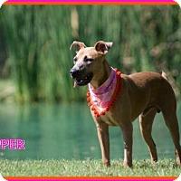 Adopt A Pet :: Skipper - San Jose, CA