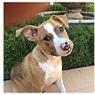 Adopt A Pet :: LUCY/ETHEL