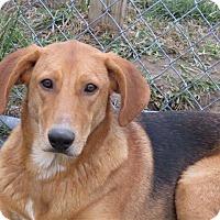 Adopt A Pet :: Jake - Liberty Center, OH