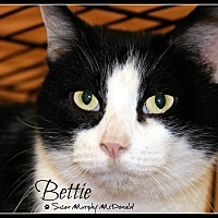 Domestic Mediumhair Cat for adoption in Cumberland and Baltimore, Maryland - Bettie