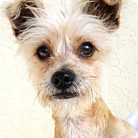 Adopt A Pet :: ToTo - Key Largo, FL