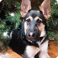 Adopt A Pet :: REEVEN VON RHAMES - Los Angeles, CA