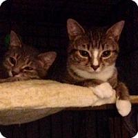 Adopt A Pet :: Hannah and Chris - Brooklyn, NY