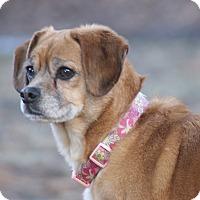 Adopt A Pet :: Ariel - Mt. Prospect, IL