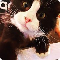 Adopt A Pet :: Armani - Baltimore, MD