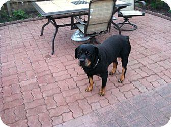 Rottweiler Mix Dog for adoption in Bellingham, Washington - Abby & Kahlana