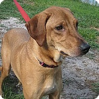 Adopt A Pet :: Snickers - Orange Park, FL