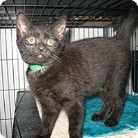 Adopt A Pet :: Ward - Shelton, WA