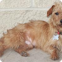 Adopt A Pet :: Bert - Norwalk, CT
