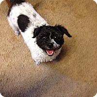 Adopt A Pet :: Stella - Carey, OH