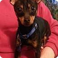 Adopt A Pet :: Lincoln - Columbus, OH