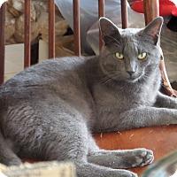 Adopt A Pet :: Smokey - Fort Wayne, IN