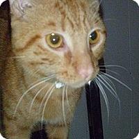 Adopt A Pet :: Theo - Hamburg, NY