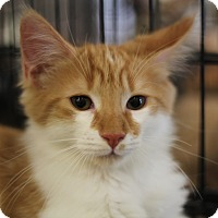 Adopt A Pet :: Butch - Richmond, VA